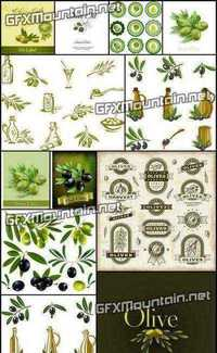 Stock Vector - Collections of Olive Elements 2