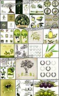 Stock Vector - Collections of Olive Elements 1