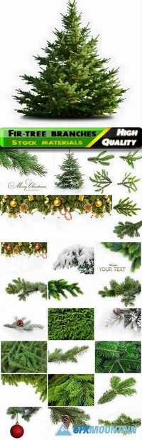 The branches of the snow-covered green fir-tree with needles and cones for Christmas and New Year isolated on white backgrounds Stock images