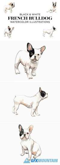 Black and White French Bulldogs 2025077