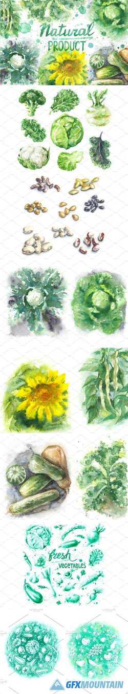 NATURAL PRODUCT WATERCOLOR - 2170445