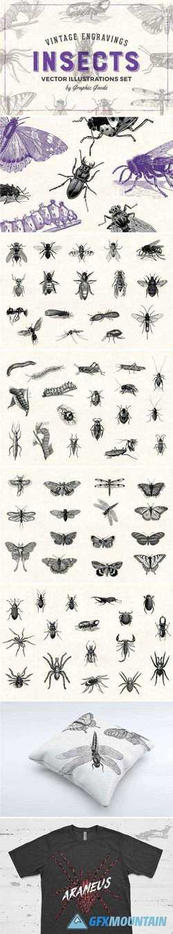 INSECTS - VINTAGE ILLUSTRATIONS - 1452979