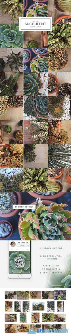 Savory Succulent Photo Bundle 1903036