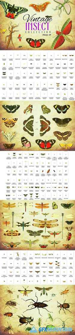 172 Vintage Insect Vector Graphics 3 - 3493784