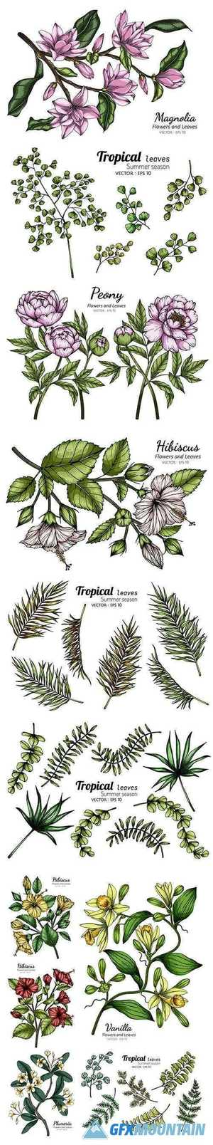 Tropical and other Leaf Drawing Illustration