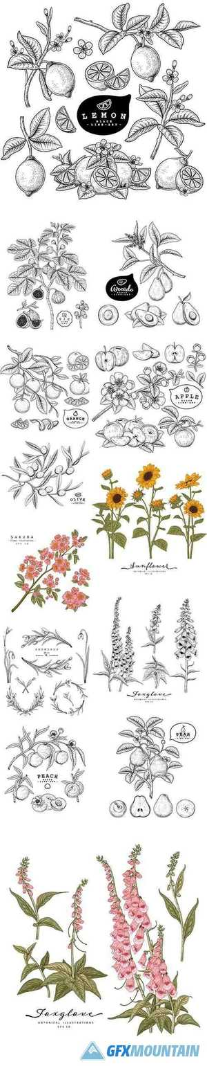 Hand-Drawn Botanical Illustrations Set